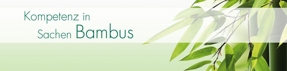 Bambus Gartengestaltung Schlautkötter Der Bambusspezialist In Köln