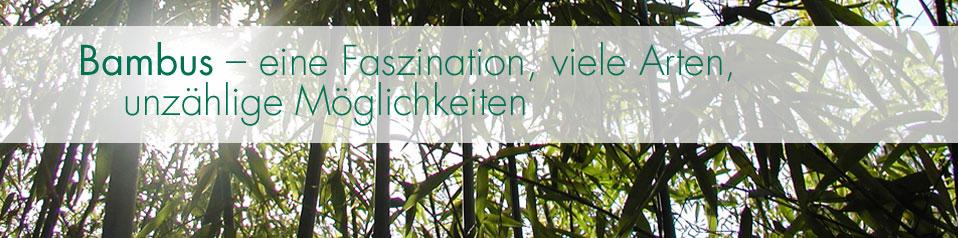 Bambusinsel Gartengestaltung Schlautkötter